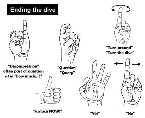 Scuba Diving Hand Signals | Summer Divers